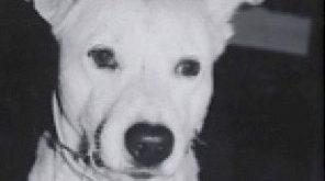 Vaseline (dog)